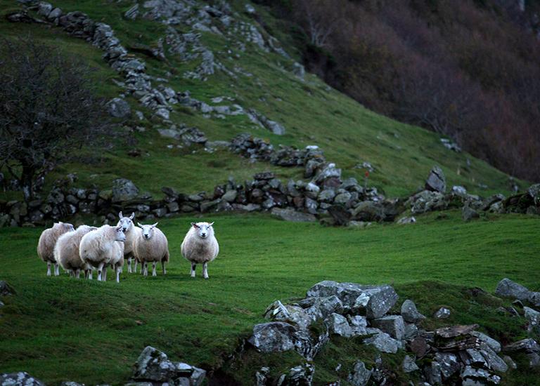 Lana Norvegese, ecosostenibile a filiera corta